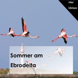 Sommer am Ebrodelta