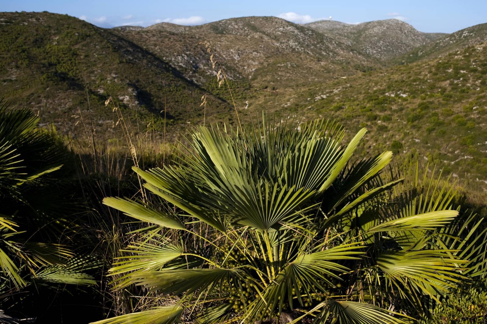 Naturpark Garraf © Ajuntament de Sitges Servei de Turisme