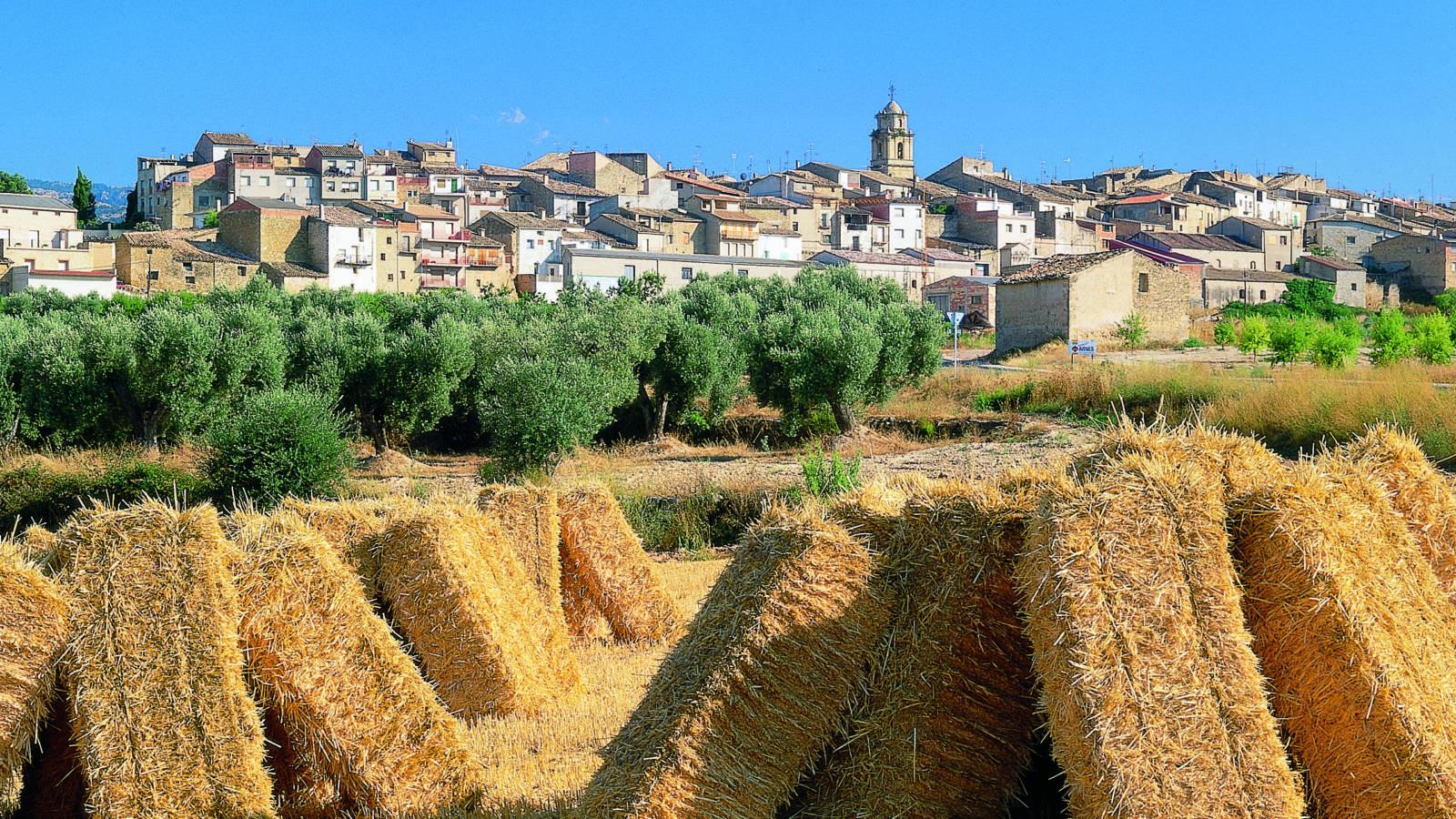 Arnes, Ebrodelta