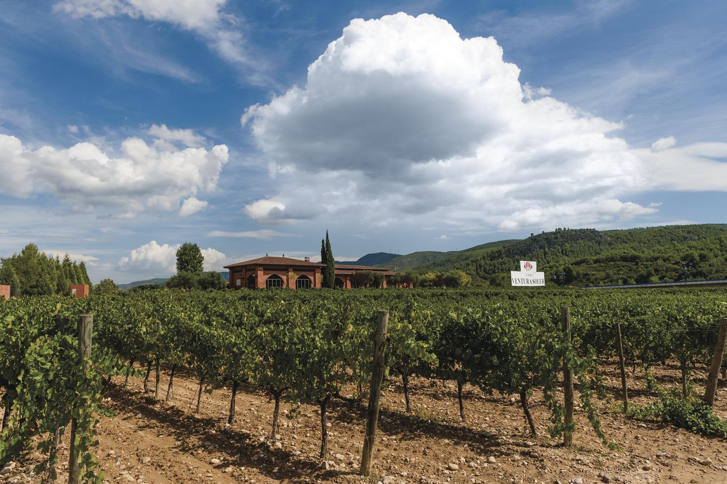 Caves Ventura Soler, Penedès Weingebiet, Katalonien