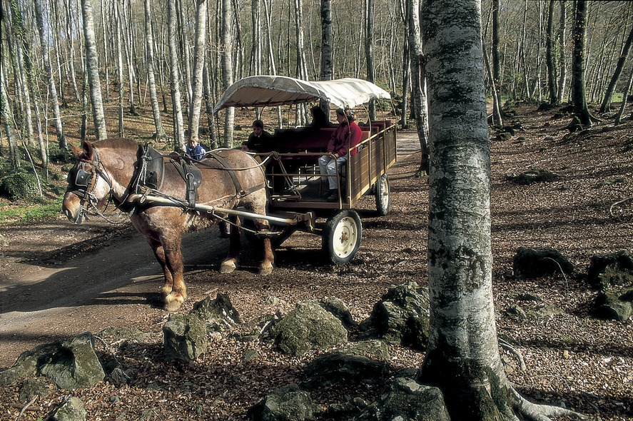 A carriage ride in La Fageda d'en Jordà In a forest near the town Interior of the Barcelona Maritime Museum. Arches of the cloister of the Castle Monastery of Sant Miquel d'Escornalbou Main façade of Barcelona Cathedral Suda Castle and Seu Vella El Celler de l'Aspic restaurant in Falset Façade of the Geology museum, by Antoni Rovira i Trias Monumental fountain and doorway to the church of Vallbona de les Monges monastery Boats in the port at dusk 2 Attic of Antoni Gaudí's Casa Batlló. Apse of the church of Sant Feliu Doorway of the church of Santa Maria. Royal Monastery of Santa Maria de Poblet View of the town and Sierra de Mussara, in the Prades mountains Boiled butifarra (Catalan sausage) with beans. Giants during the street parade at Corpus Christi Port of Aiguablava. Boat in the port Confit of pork Wellness. Peralada Wine Spa. Branches with the strawberry tree fruit (Arbutus unedo). Yachts moored in the port of Vilanova i la Geltrú Sailing boat masts reflected in the water of the port Altarpiece of Santa Maria de Tots els Sants (1400). Pere Serra. Monastery of Sant Cugat d'Octavià Cloister of Sant Domènec in the old convent of Roser dels Agustins Library of Catalonia, in the old hospital of Santa Creu. Dining area in the Catacurian hotel Fountains at Montjuïc Masía in the Montseny massif Waterfall in the Montseny Natural Park. La Fageda d'en Jordà. General view of the port at Roses Wellness. Bottles and glass of wine Interior of the Codorniu cellars Gema Monroy, from Traveller magazine, preparing crema catalana during a cookery class in the Empordà Gastronomic Classroom Night view of the Mas de Torrent Hotel Cabos atados a un proíz en el Puerto del Estartit Transept of the church of the Royal Monastery of Santa Maria de Vallbona. Quad bikes. Sau reservoir Church of Sant Salvador de Granyanella Museu Municipal Josep Aragay Tomb of the church of Sant Joan de les Abedesses monastery Godfather during th