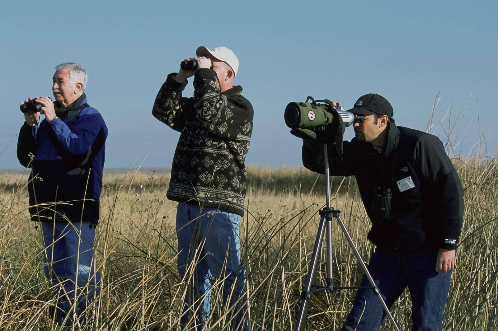 Zen in der kunst des vögelguckens birdwatching in katalonien für